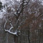 mein Lieblingsbaum: Kasimir's Baum