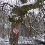 warum müssen Menschen an alten Bäumen rumschnitzen???