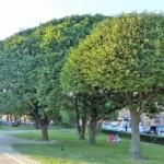 so viele schöne Bäume...