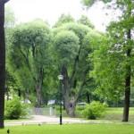 im Taurischen Garten